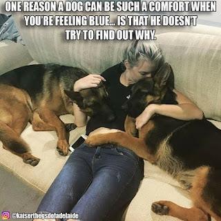 dog's compassion