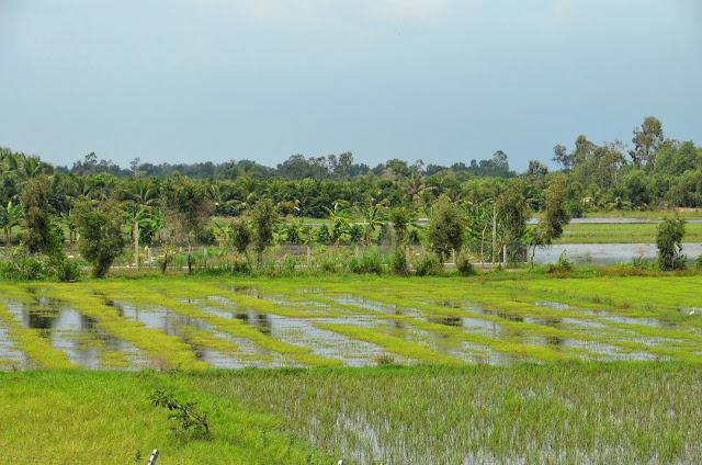 Riziculture dans le delta du Mékong. Photographie Pierre Doyen (CC)