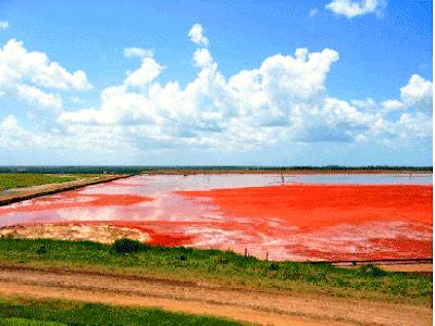 ALERTA! São Luís possui depósito de resíduos quase do tamanho da Lagoa da Jansen
