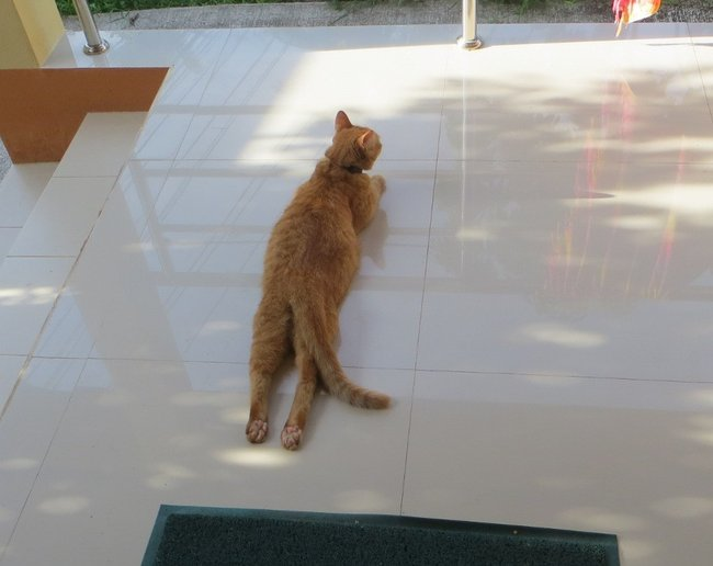 Кот лежит на животе