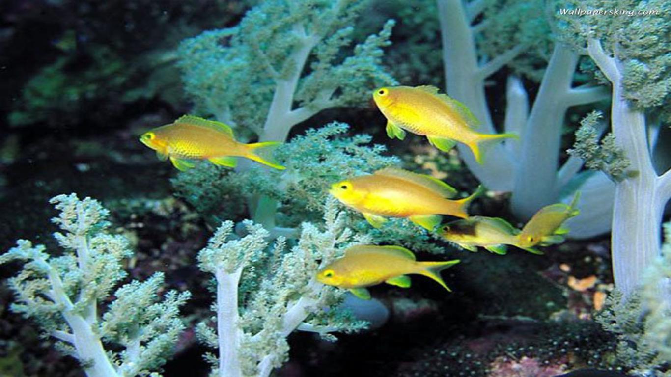 Gambar Gambar Ikan Yang Cantik 47 Foto Glmour Gallery Wallpaper
