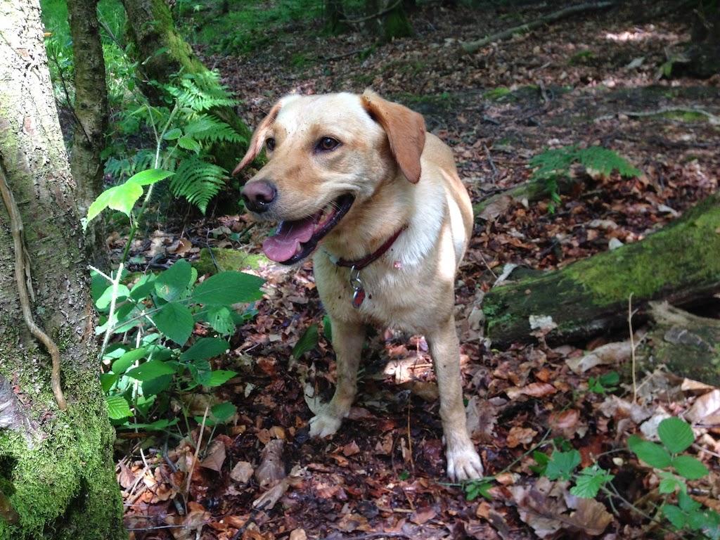 Tin Box Dog enjoying the great outdoors