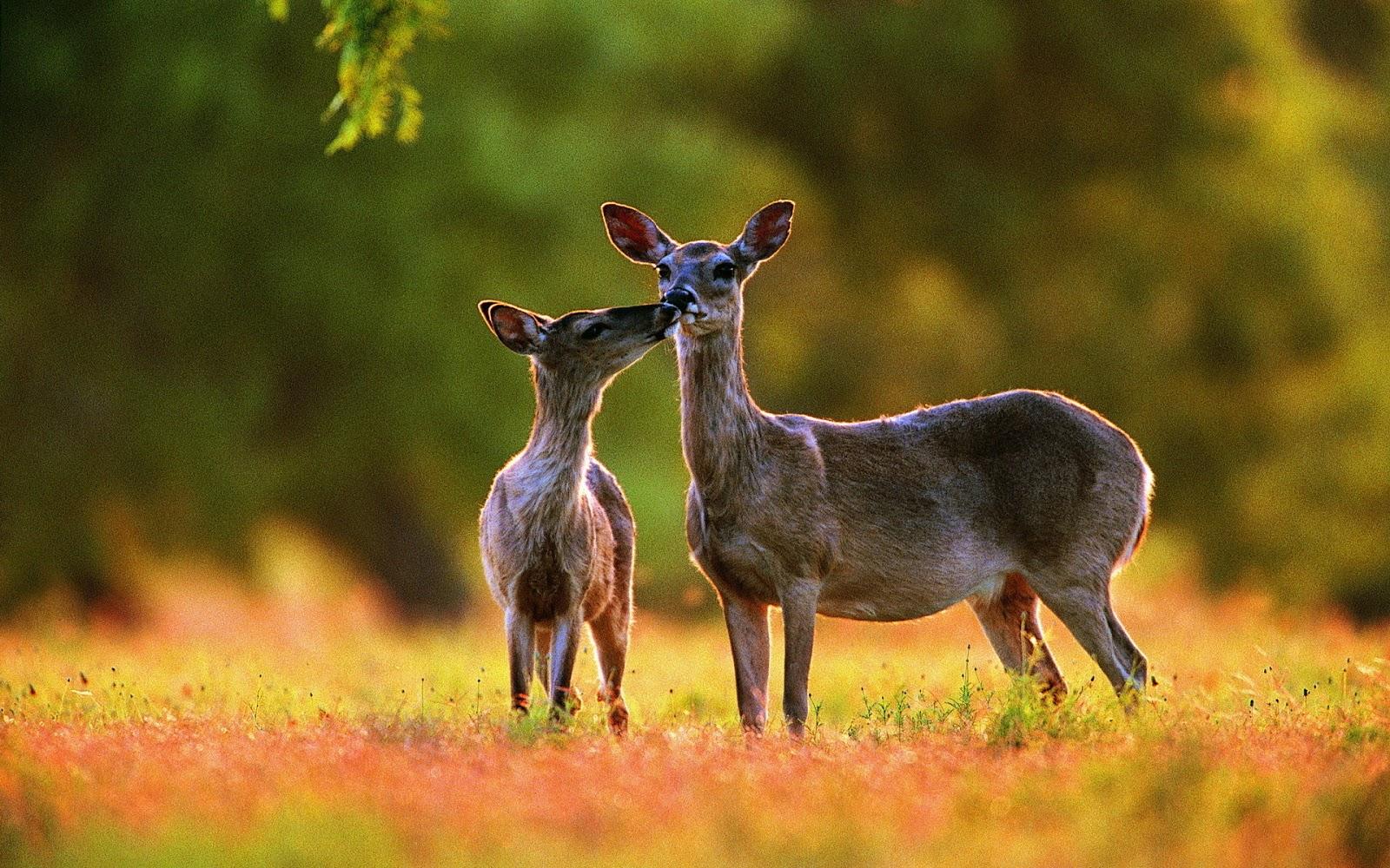 letest and best animals hd wallpapers download animals desktop