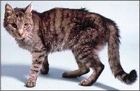 Tumori del gatto