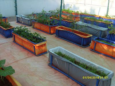 Organic Farming வீட்டு தோட்டம் thagavalthalam