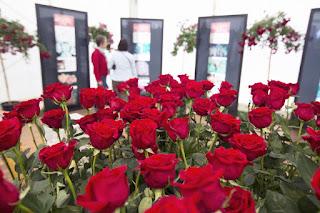 Feria de la Rosa Roses