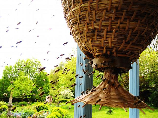 Κυψέλη - το σπίτι της μέλισσας!!!