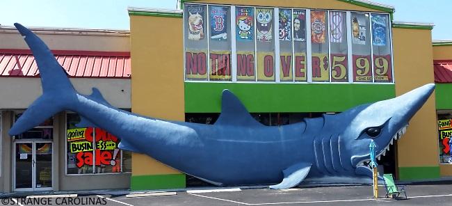 Eastbound Down Shark North Myrtle Beach Sc Strange Carolinas