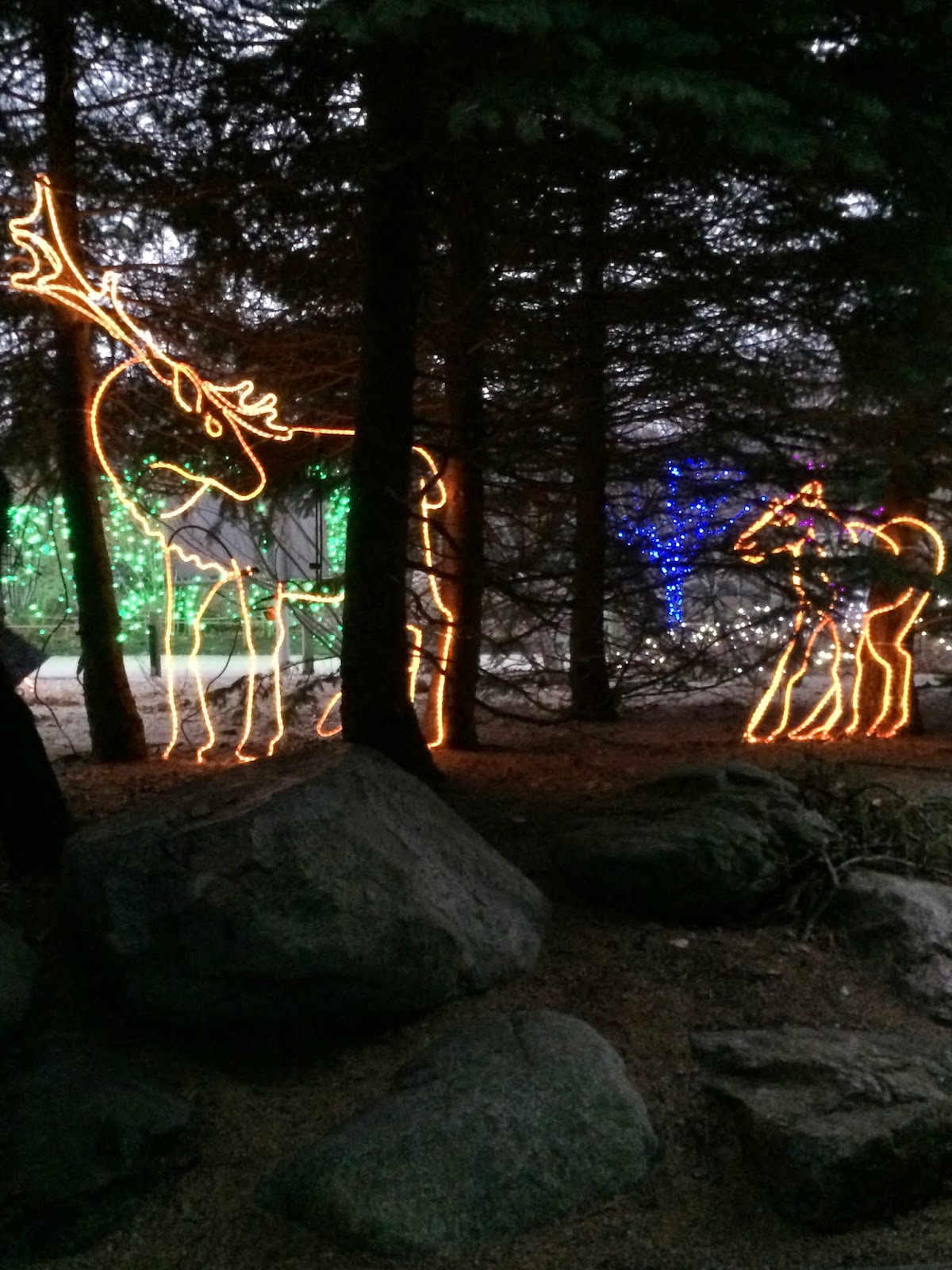 some of the highlights of the lights before christmas were a dancing light display that was set to energetic holiday tunes an ice slide and checking out - Lights Before Christmas Toledo Zoo