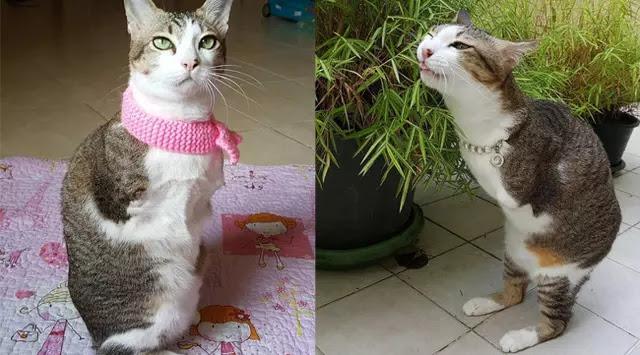 Terlintas Tidak Ada yang Aneh Dengan Kucing Ini, Setelah Anda Cermati Ternyata...