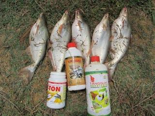 budidaya ikan patin dengan produk viterna