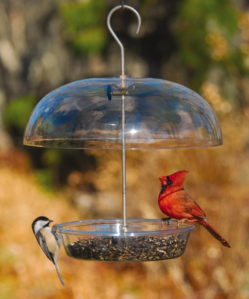 Wild Birds Unlimited: What You Need To Do Right Now To