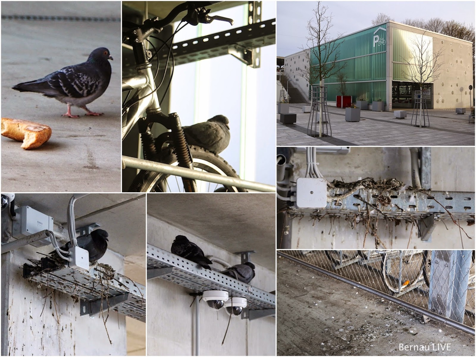 Bernau: Fahrradparkhaus von Tauben beschlagnahmt -