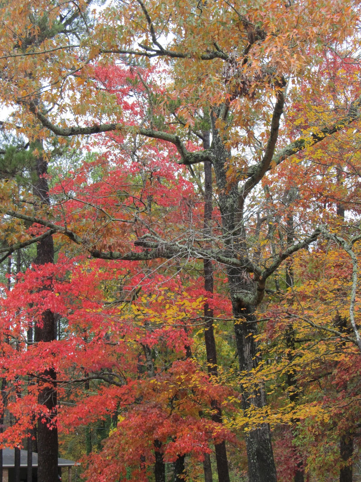 PrunePicker: Pretty Fall Leaves On The Way To Lunch