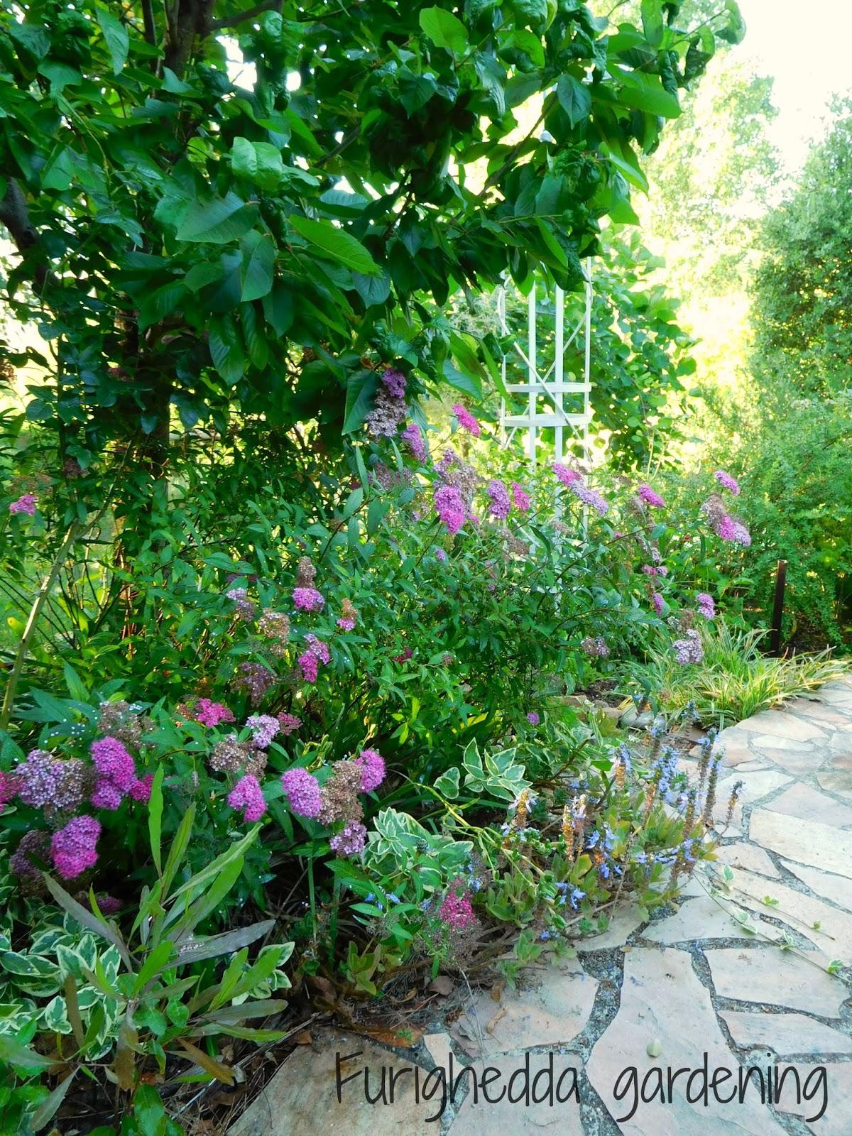 Il costo di un giardino by delia furighedda gardening for Quanto costa un impianto di irrigazione per giardino
