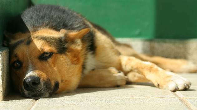 5 Tips for Keeping Your Pets Safe in Hot Weather