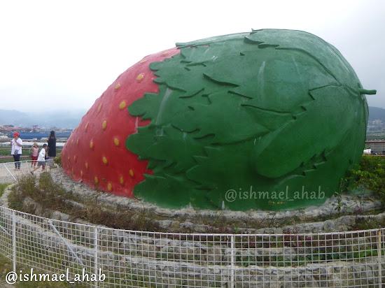 Giant strawberry in Strawberry Farm in La Trinidad, Benguet
