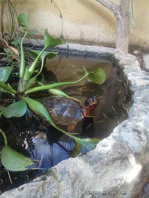 Estanque para las tortugas