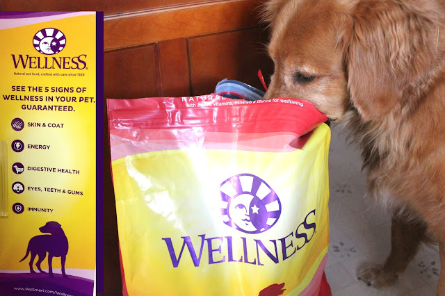 5 signs of wellness in your pet with Wellness Complete Health Dog Food