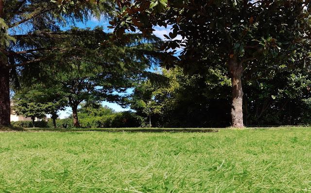 Blogcohousinglospaziodelleimpronte rimedi naturali contro le zanzare - Rimedi contro le zanzare in giardino ...