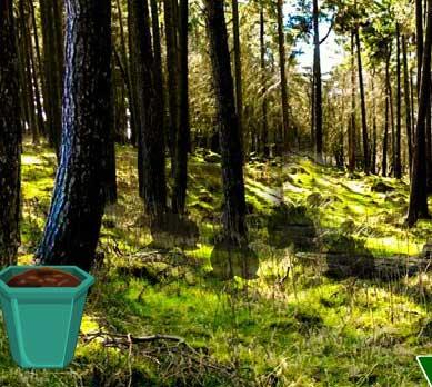 Nature Fruit Forest Escape solución, guía, ayuda