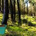 Nature Fruit Forest Escape
