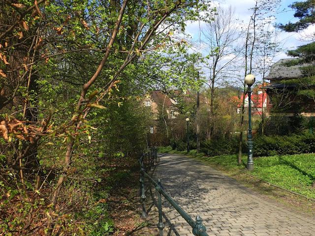 Lasek miejski (Cieszyn)