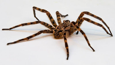 تفسير رؤية العنكبوت في المنام