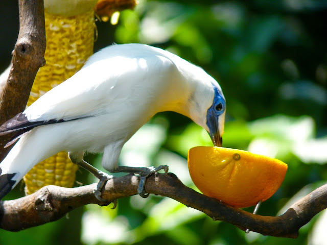 Flora Dan Fauna Bali The Colour Of Indonesia
