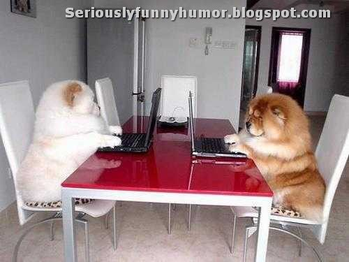 puffy-dog-bears-sitting-table-playing-on-lap-tops