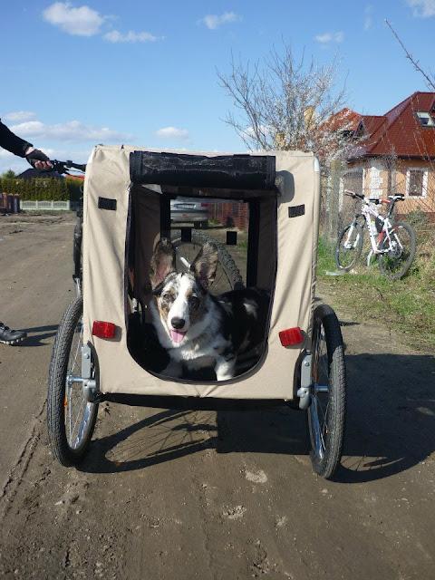 podróże z psem, w góry z psem, rower z psem