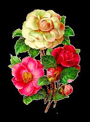flower camellia rose clip flowers scrapbooking digital antique flores floral paper downloads crafting afbeeldingsresultaat voor gift manuais trabalhos salvo google