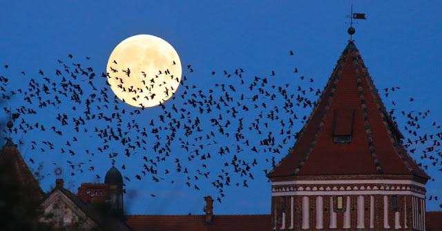 Eclipse - Castelo Medieval -  Mir - Bielo-Rússia - Sergei Grits