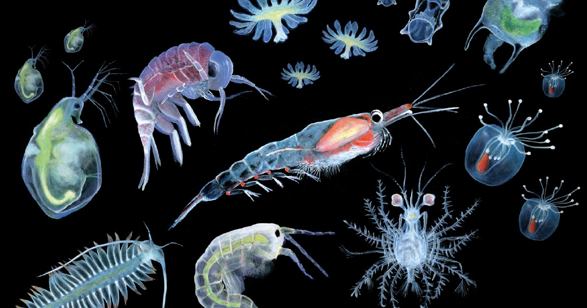 Plankton: small organisms of big importance - Sanja Zamuda