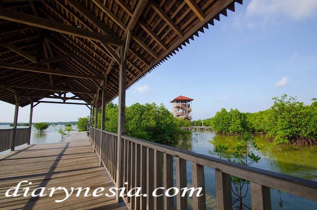 mangrove forest karimun jawa, best place to visit ini central java, things to do in karimun jawa, diarynesia
