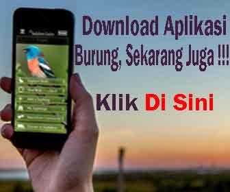 Download Aplikasi Burung Terbaru