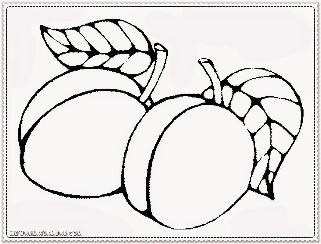 apricot coloring pages and activities