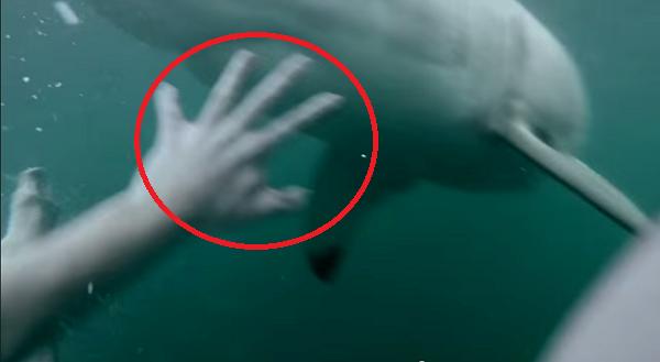 Hombre graba su salto y casi su muerte de las fauces de un Gran Tiburon Blanco