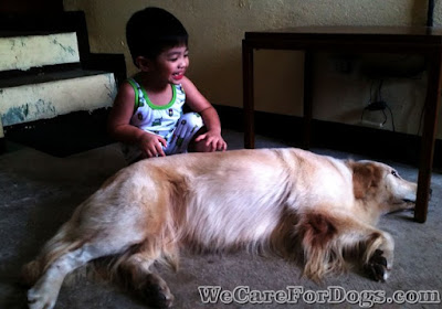 mhershey golden retriever and baby