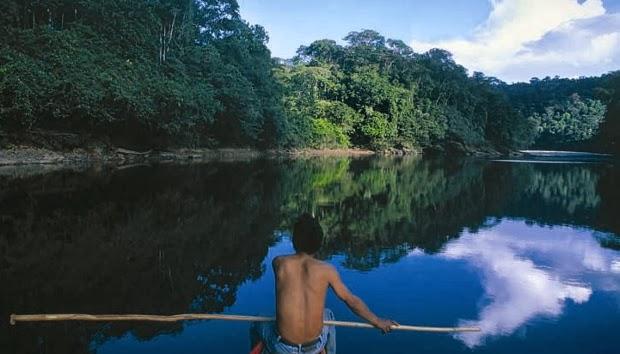 deforestación  amazónica  problemas