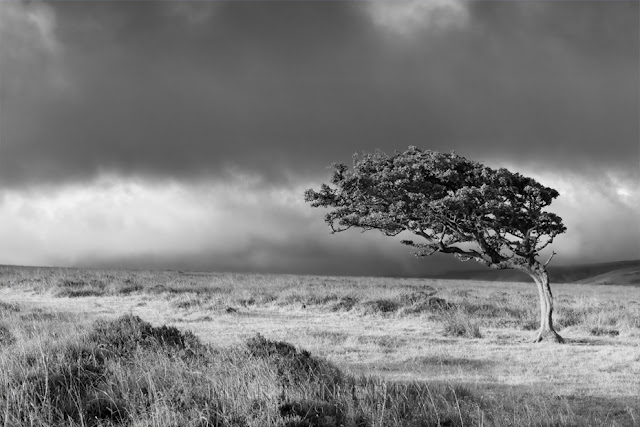 Interestesting tree in Exmoor National Park in monochrome by Martyn Ferry Photography