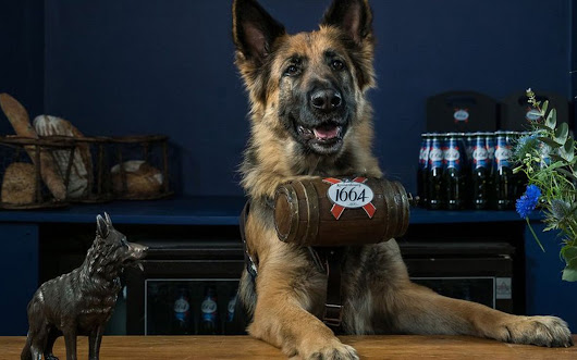 Dogs Serve Warm Beer in London Pub