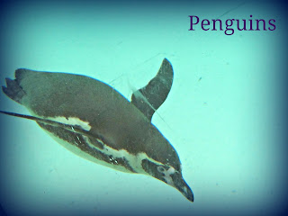 london zoo, zoo, penguin, picmonkey photo