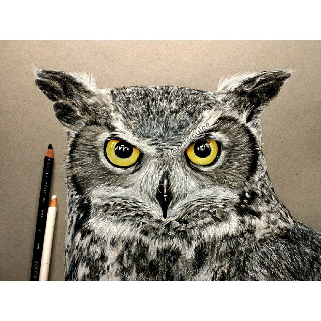 13-Owl-Kaylee-Yang-nalikaylee-Realistic-Drawings-which-Include-Animals-and-Objects-www-designstack-co