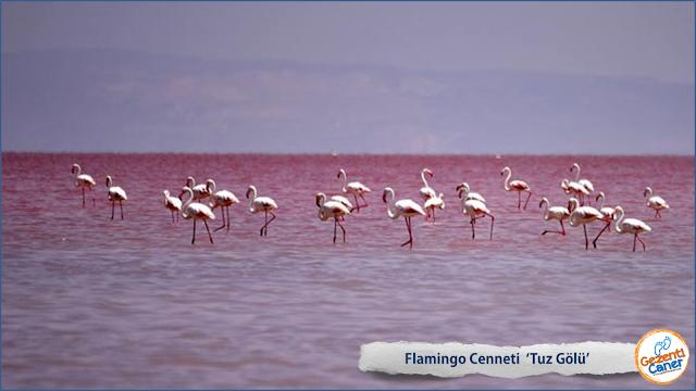 tuz-golu-flamingo