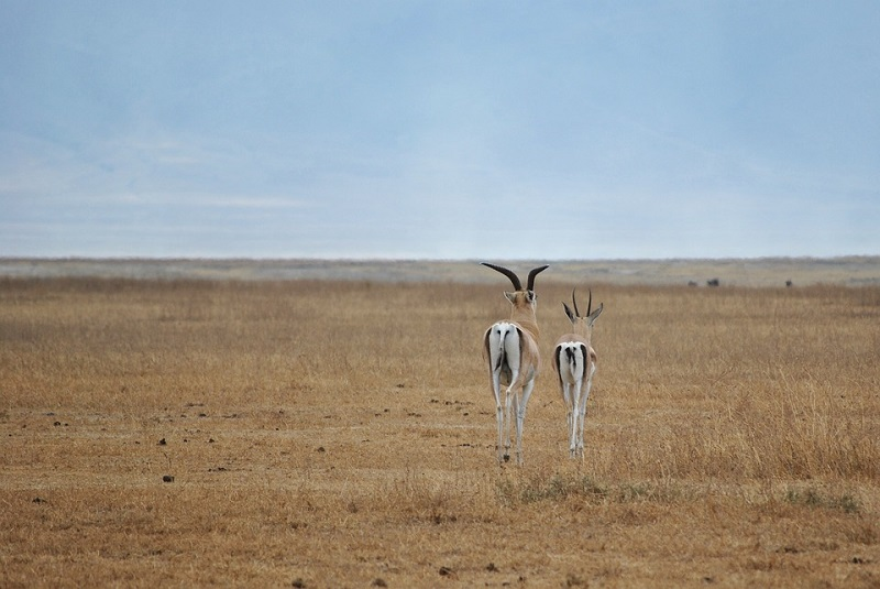 Best places to spot the Big Five in Sub-Saharan Africa 2
