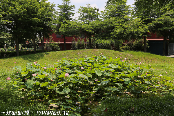 台中潭子|頭家厝將軍廟、小而美的荷花池