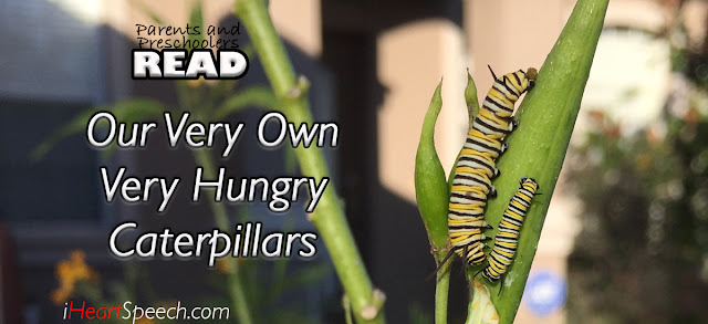 caterpillars on a milk weed plant; language development activities to go along with The Very Hungry Caterpillar