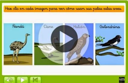 http://www.primaria.librosvivos.net/2epcmcp_ud5_act3_inv__Para_que_utiilizan_las_aves_sus_patas_.html