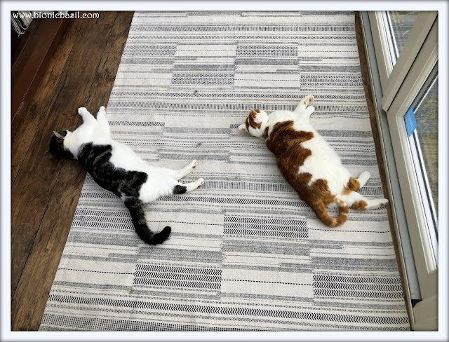 Amber and Melvyn Synchronised Snoozing @BionicBasil The Pet Parade 292